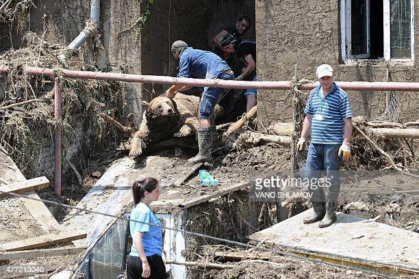Workers pull the body of a bear out of a building at a flooded zoo in the Georgian capital Tbilisi on June 15 2015 Lions tigers and even a...