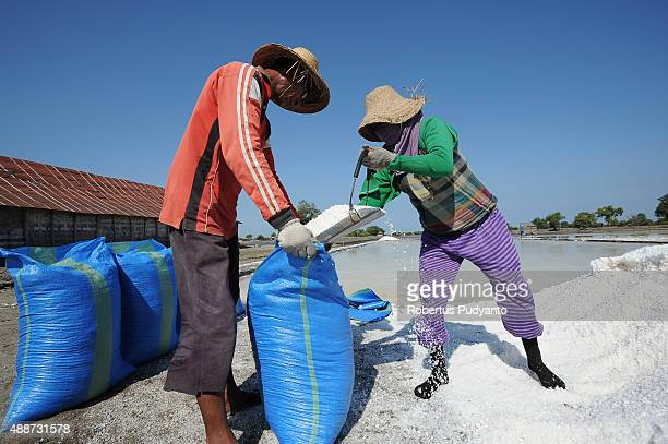 Workers put salt crystals into a sack during harvest on September 17 2015 in Sidoarjo Java Indonesia Indonesia salt harvesters have seen an increase...