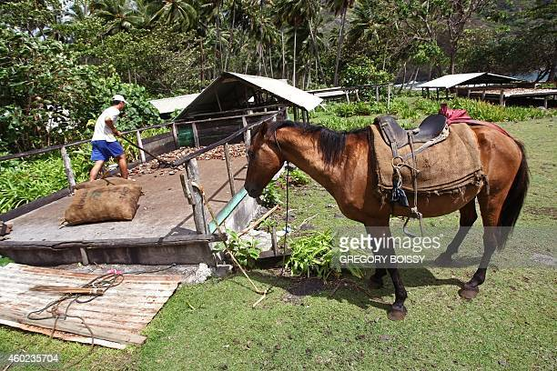 LEYRAL A workers puts to dry kernels of copra the flesh of the coconut on December 9 2014 in a valley of Hiva Oa in the Marquesas Islands archipelago...