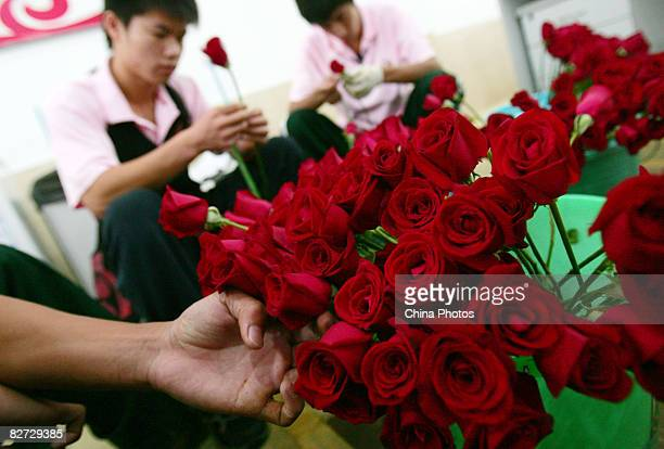 Workers select Chinese red roses to make bouquets for the Paralympic Games Award Ceremony with each of them formed by nine Chinese red roses during...