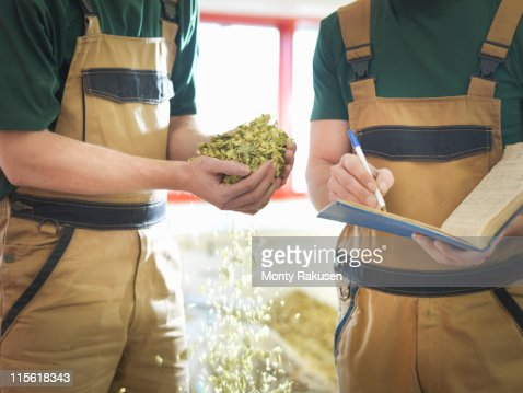 Workers selecting hops in brewery