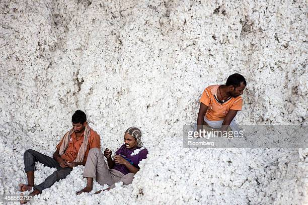 Workers sit and rest in a pile of cotton at a ginning mill in Pilibanga Rajasthan India on Wednesday Nov 5 2014 India may topple China as the world's...