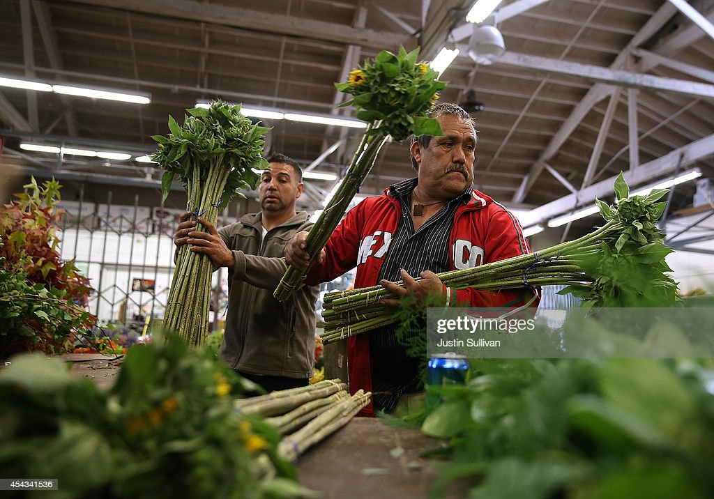Workers sort sunflowers at the San Francisco Flower Mart on August 28, 2014 in San Francisco, California. The future of more than 100 flower businesses at the historic San Francisco Flower Mart hangs in the balance as Los Angeles based realty group Kilroy Realty Corp. is planning on purchasing the Flower Mart property. Kilroy has proposed a plan to build a tech campus on the site.