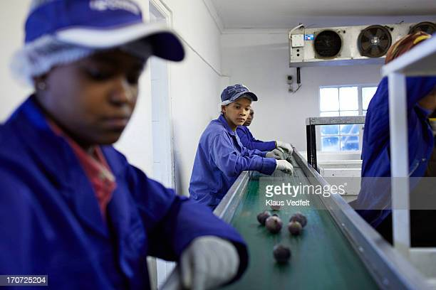 Workers sorting out figs on conveyer belt