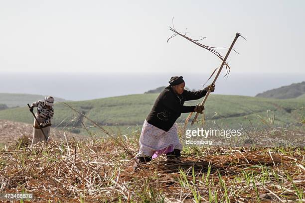 Workers spread sugarcane waste onto farmland operated by Illovo Sugar Ltd in preparation for planting later in the year in Sezela South Africa on...