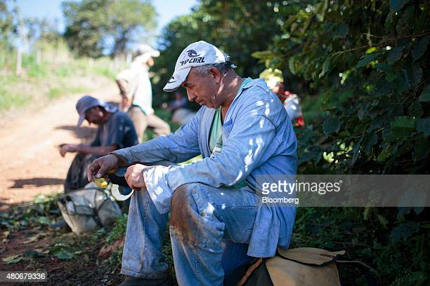 Workers take a break during harvest at a plantation in the Minas Gerais state near Guaxupe Brazil on Saturday July 11 2015 Brazil's coffee exports...