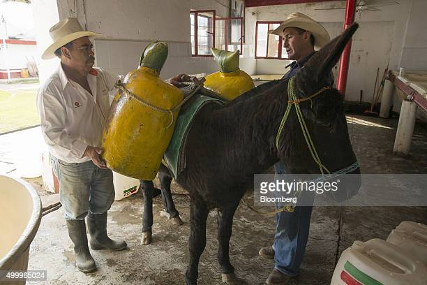 Workers take containers filled with honey water extracted from maguey plants at the Del Razo family's Rancho San Isidro farm and pulque production...