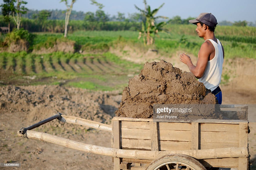 Workers transport mud, the raw material for making bricks, in a sugarcane field in Silir village. Many farmers in Indonesia have had to convert agricultural land because it is no longer profitable. Consequently Indonesian agricultural production has declined. Although Indonesia is an agricultural country, it still has to rely heavily on imported food staples such as rice, sugar, soybeans and corn. The Central Statistics Agency (BPS) announced that the number of farming households in Indonesia has decreased by 5.04 million families in the past 10 years. The 2003 Census of Agriculture claimed 31.17 million farm households. But in 2013 the number had fallen to 26.13 million. Indonesia has been listed as the world's largest sugar exporter. In 1930, when Indonesia was still called the Dutch East Indies, some 179 sugar factories produced over 3 million tons of sugar each year. Currently there are only 62 sugar factory in Indonesia..