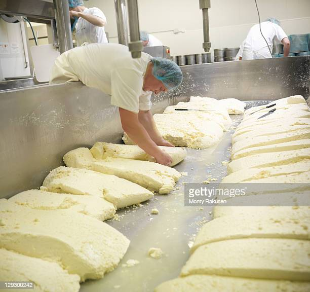 Workers turning curds in cheese-making factory