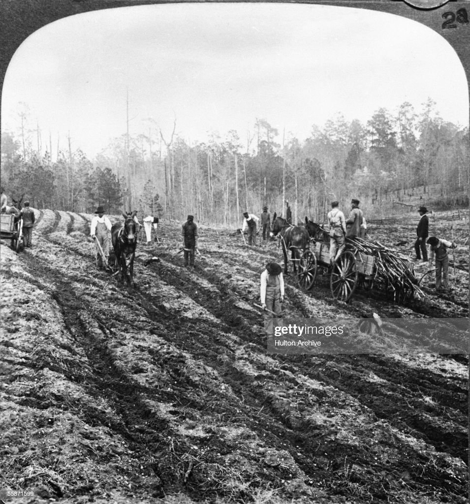 Workers using horsedriven plows plant rows of sugar cane on a plantation Georgia late 1860s