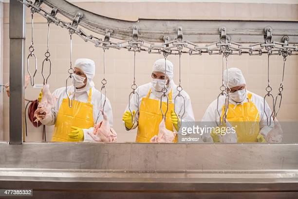 Workers working at a chicken factory