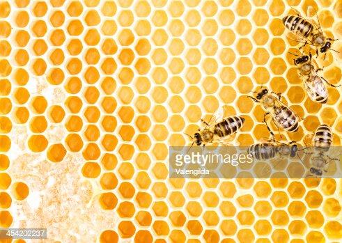 Trabajo bees : Foto de stock
