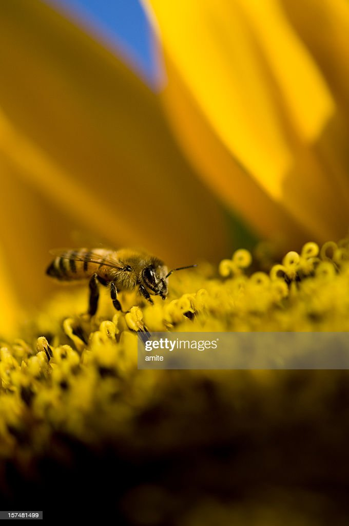 Working day (pollination)