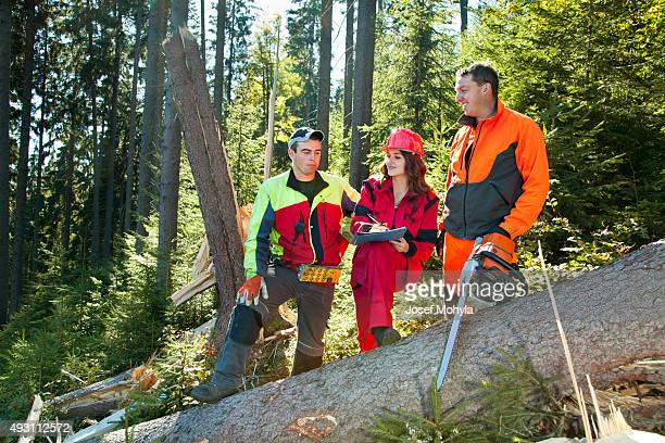 Working discussions between technical engineer and lumberjacks in forest