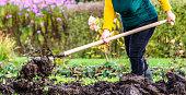 Working farmer in the garden. Organic fertilizer for manuring soil, preparing field for planting in spring, bio farming or autumn gardening concept