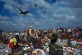 Working in a landfill 6