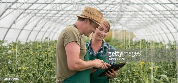 Working In Greenhouse