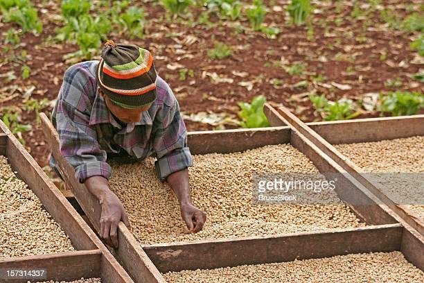 動作のコーヒー農園