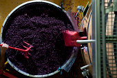 Working wine grapes in cellar