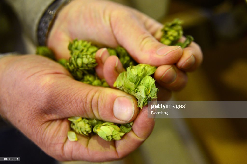 A workman holds a handful of hops for a photograph at Hops Products Australia's operations in Bushy Park, Tasmania, Australia, on Tuesday, Feb. 26, 2013. Australia's Bureau of Statistics is scheduled to release fourth-quarter gross domestic product figures on March 6. Photographer: Carla Gottgens/Bloomberg via Getty Images