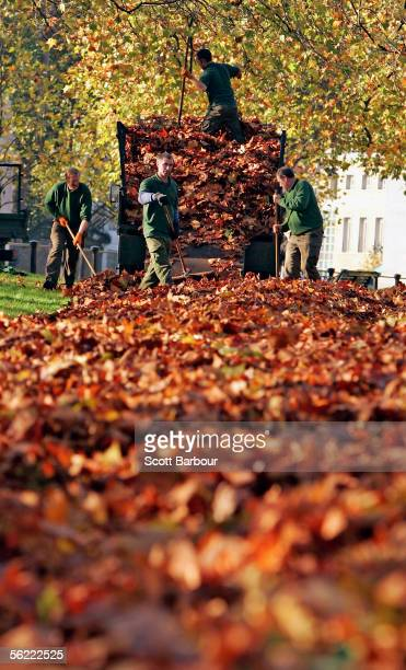 Workmen clear up autumn leaves in Green Park on November 18 2005 in London England Temperatures have been below freezing overnight in London as a...