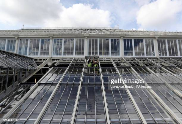 Workmen in the Royal Botanic Gardens in Kew SW London adjust the windows on the Temperate House that will reopen in May next year after the pound41...