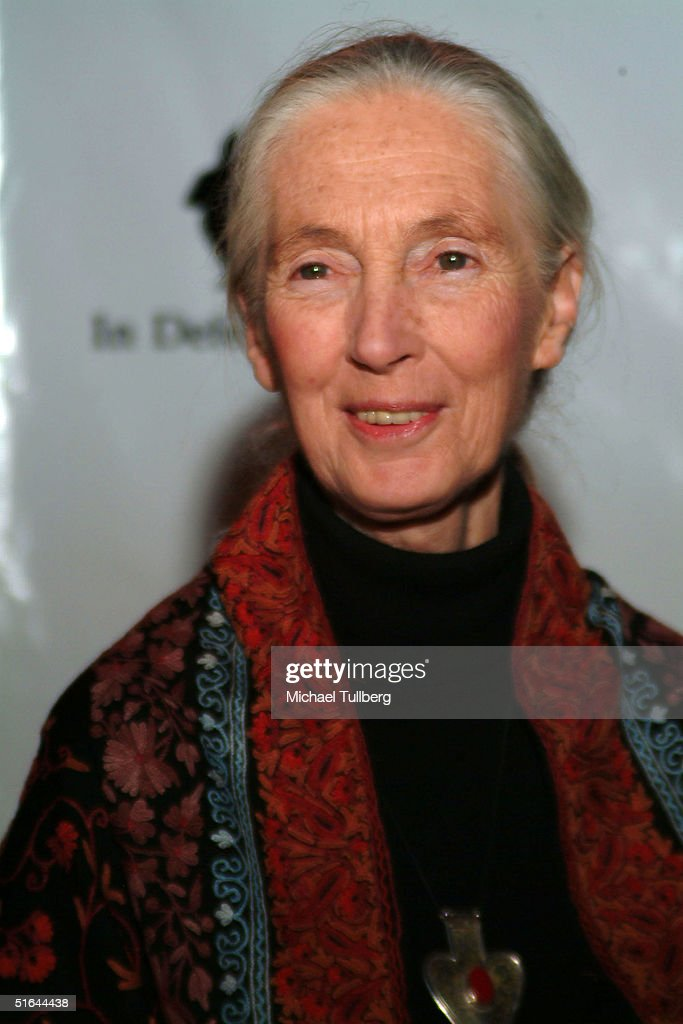 World famous anthropologust Doctor Jane Goodall arrives at the 'In Defense Of Animals Guardian Awards Fundraiser' on October 20, 2004 at Paramount Studios in Hollywood, California.