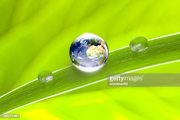 world globe on green leaf