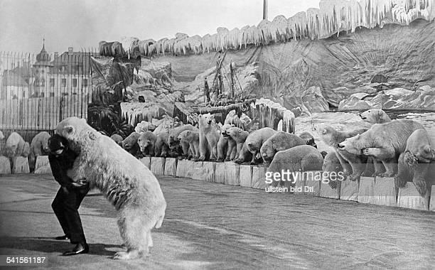 world greatest show dressage of Wilhelm Hagenbeck wrestling match with polar bears Published by 'Berliner Illustrirte Zeitung' 34/1908Vintage...