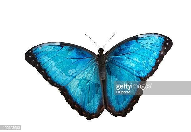 World map on butterfly wings