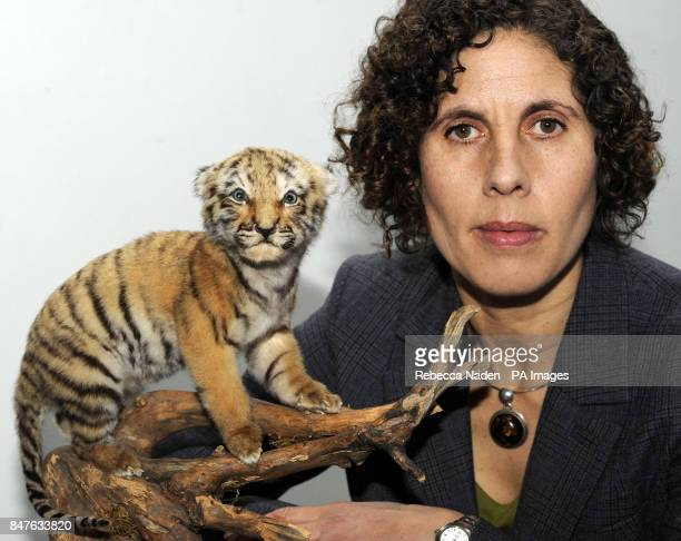 World Society for the Protection of Animals UK Director Suzi Morris next to a ten day old stuffed tiger cub seized by the Metropolitan Police Service...