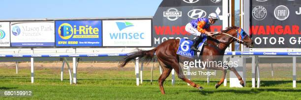 World Traveller ridden by Lachlan King wins the Rob Stribley Transport Maiden Plate on May 08 2017 in Wangaratta Australia