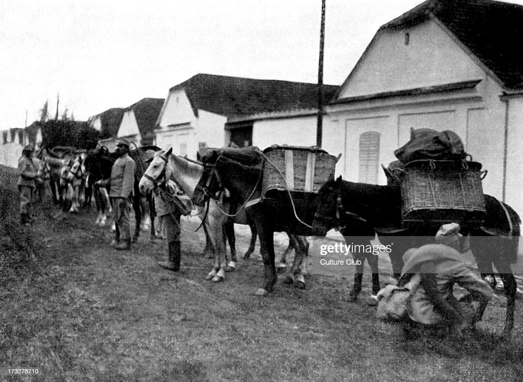 Austro Hungarian War Horses in the street of a Serbian village street reading for marching Published 4 November 1915