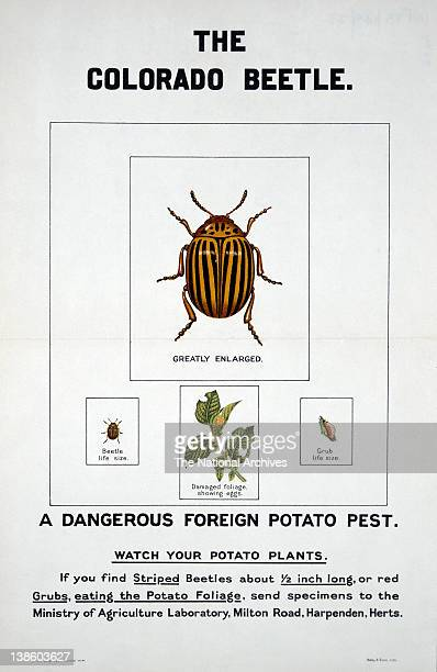 World War II poster Lend A Hand On The Land Colorado Beetle