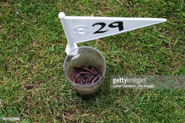 Worms in a pot at the 34th World Worm Charming Championship in Willaston Cheshire PRESS ASSOCIATION Photo Picture date Saturday June 22 2013 Photo...