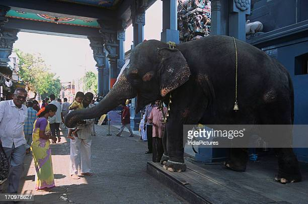 Worshipers at Vinayagar Temple Manakula Pondicherry Tamil Nadu India