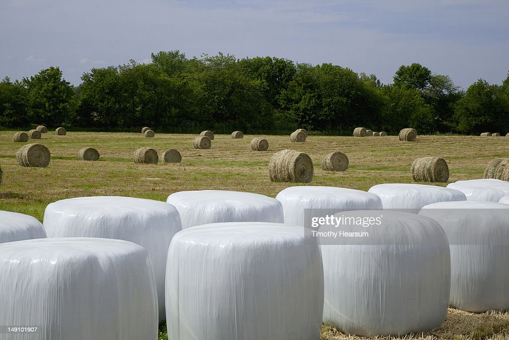 Wrapped and unwrapped hay bales in field