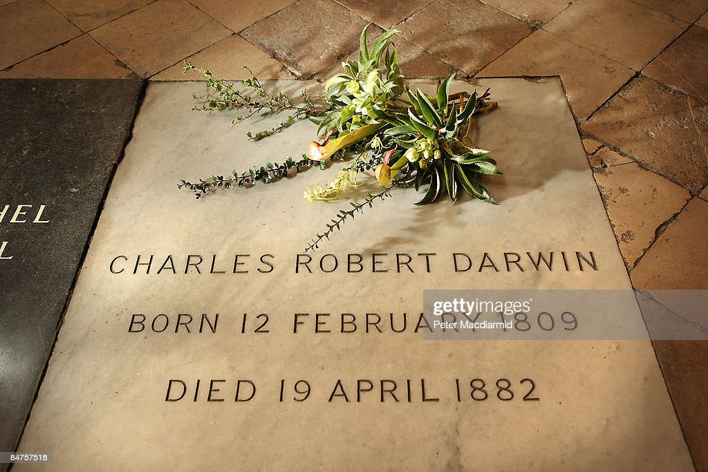 A wreath of plants from Charles Darwin's garden lie on his grave on the 200th anniversary of his birth at Westminster Abbey on February 12, 2009 in London. The Helleborus and Berberis Darwinii (discovered in South America in 1885 by Darwin during the voyage of the Beagle) placed on the grave of Darwin in the Abbey are taken from the garden of Down House in Kent - where he researched and wrote 'On The Origin of Species' published in 1859. An evensong followed by a wreath laying ceremony, attended by decendent's of Darwin, will take place tonight at The Abbey.