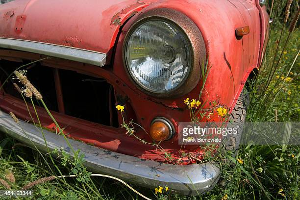 A wrecked red car is standing on a green meadow grass and flowers are growing over it