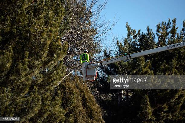 Wright Tree Service contracted by Excel cuts down trees February 10 2015 along the fence line on Dry Creek Road between Quebec and Jersey Homeowners...