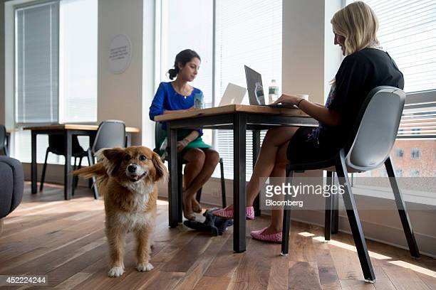 Wrigley the dog stands near Google employees Melissa Nitti left and Jamie Hill at the Google Inc office in Washington DC US on Tuesday July 15 2014...