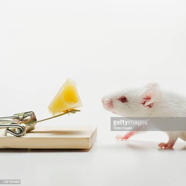 Write mouse near mousetrap, studio shot