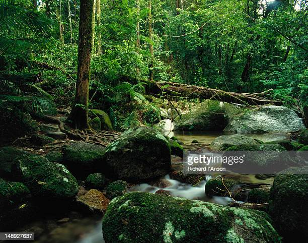 Wurumbu Creek rainforest in Mossman Gorge.