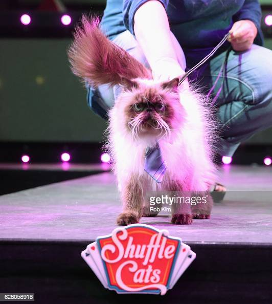 Wylie winner of the 'America's Next Shuffle Cat' on the catwalk at Marquee on December 6 2016 in New York City