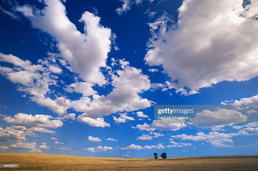USA, Wyoming, cumulus clouds over 2 cottonwood trees on prairie : Stock Photo