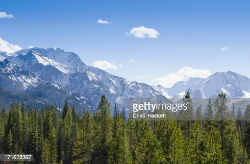 USA, Wyoming, View of forest with Rocky Mountains in background