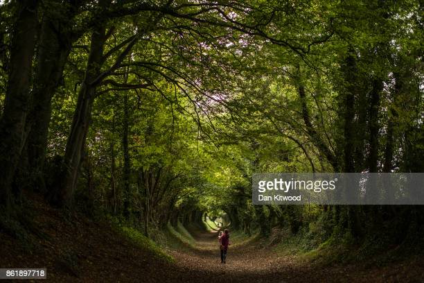 Xanthe LewisHall and her mum walk through a tunnel of trees down an old Roman Road on October 16 2017 in Halnaker England The South East of the...