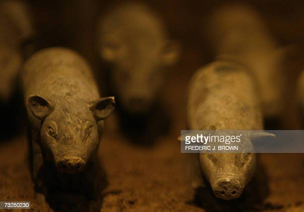 Terracotta pigs dating back some 2100 years on display behind a glass enclosure 07 February 2007 at the Yang Ling Tomb for the Han Dynasty's Jing Di...