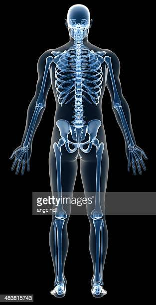 X-ray human body of a man with skeleton for study