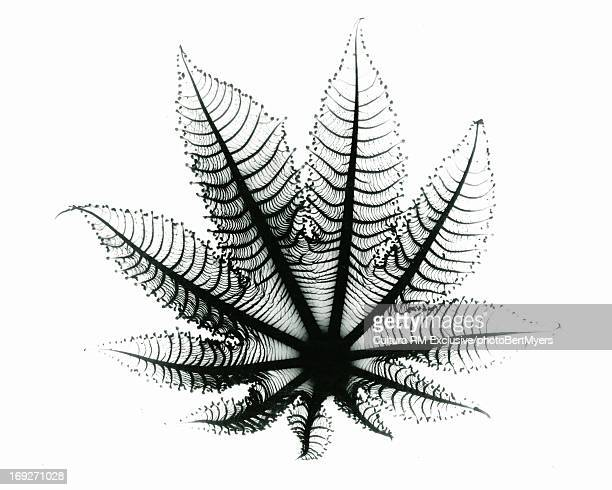 X-ray image of leaf paper plant